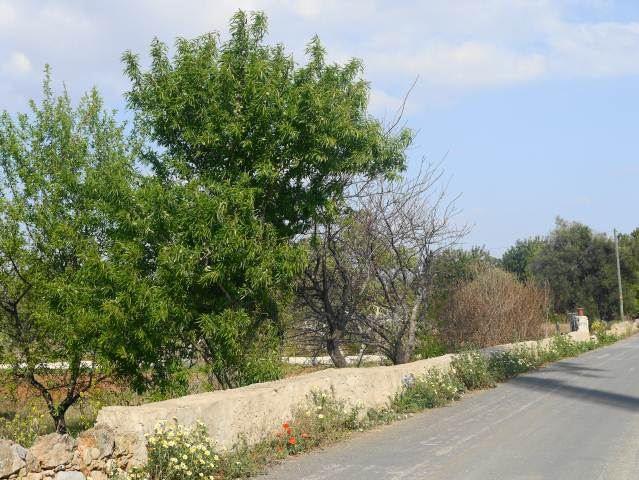 WALKS IN CONCEICAO,NEAR CABANAS IN ALGARVE,PORTUGAL