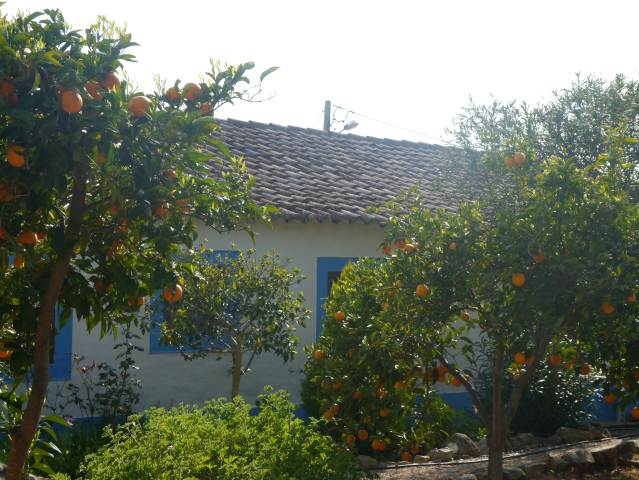 ORANGE TREES AND COTTAGE,CABANAS DE TAVIRA.,PORTUGAL