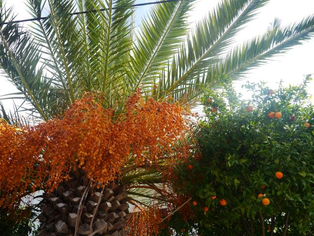 Algarve Tropical Palm & Oranges