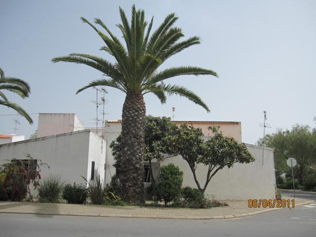 PALM TREE CABANAS ALGARVE PORTUGAL