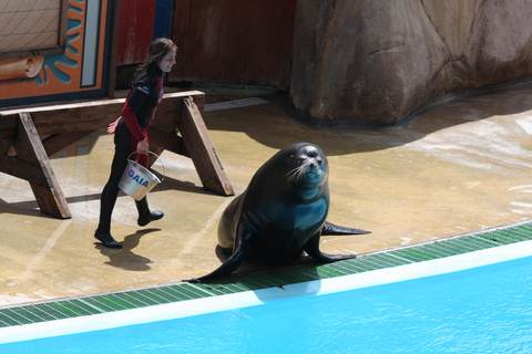 SEALION AT ZOOMARINE ALGARVE PORTUGAL