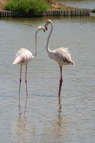Flamingos in the Algarve Portugal
