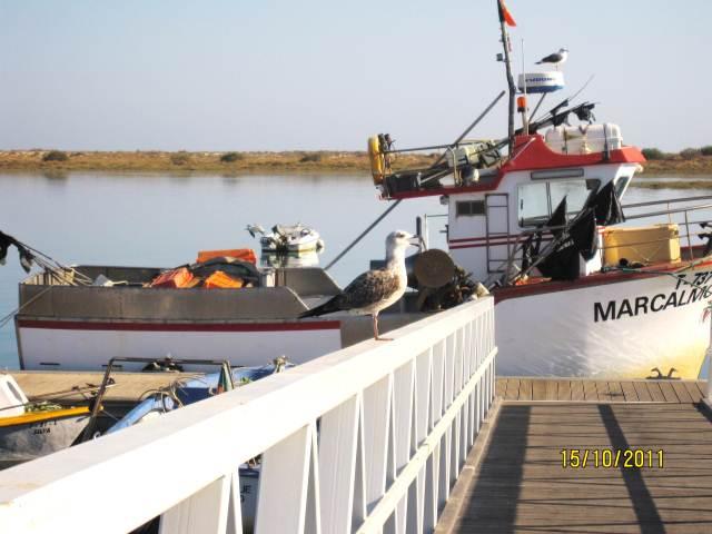 CABANAS MARINA WITH east-west-algarve.com