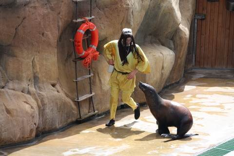 The Pirate and Sealion at Zoomarine Algarve Portugal