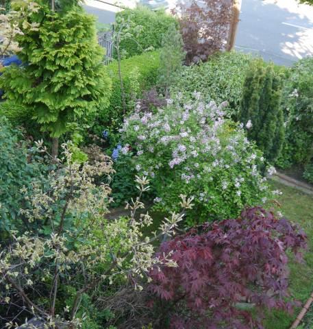 east-west-algarve our spring garden SUBURBIA